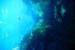 Lagoa Misteriosa [bonito_0813]