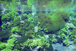 Lagoa Misteriosa [bonito_0820]
