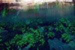Lagoa Misteriosa [bonito_0821]