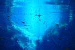 Lagoa Misteriosa [bonito_0836]