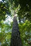 Tree [bonito_0839]