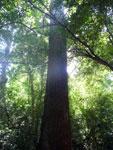 Tree [bonito_0842]
