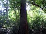 Tree [bonito_0843]