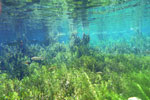 Underwater pictures of the crystal clear waters of the Aquario Natural