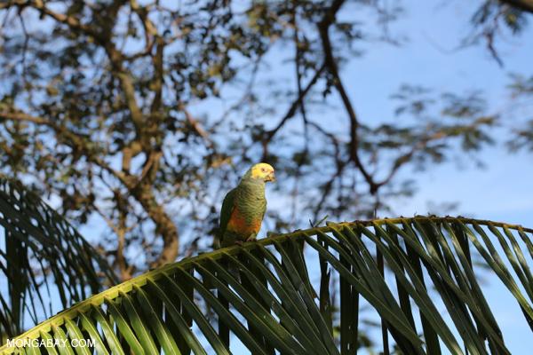 Parrot [bonito_0012]