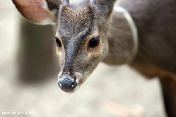 Deer [bonito_0350]