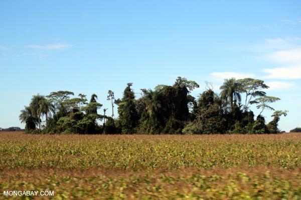 Forest fragment among corn fields in Brazil