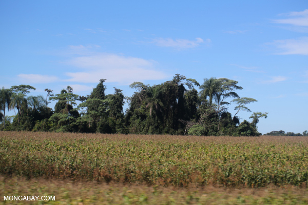 Forest fragment among maize fields in Brazil