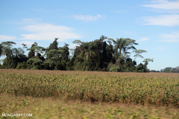 Forest fragment among pasture and agricultural land in Brazil