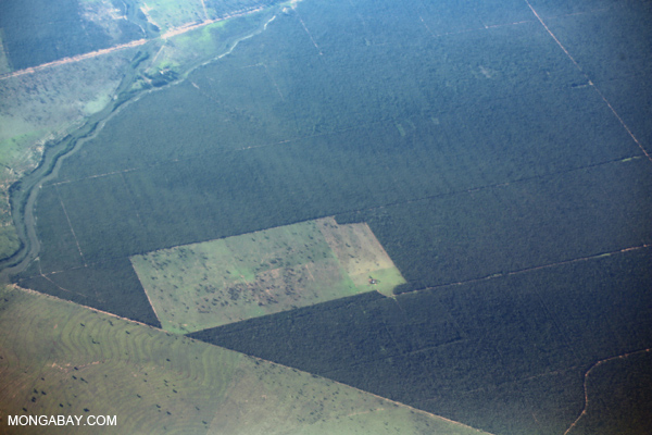 Aerial view of forest fragments