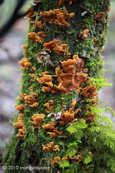 Rust-orange fungi