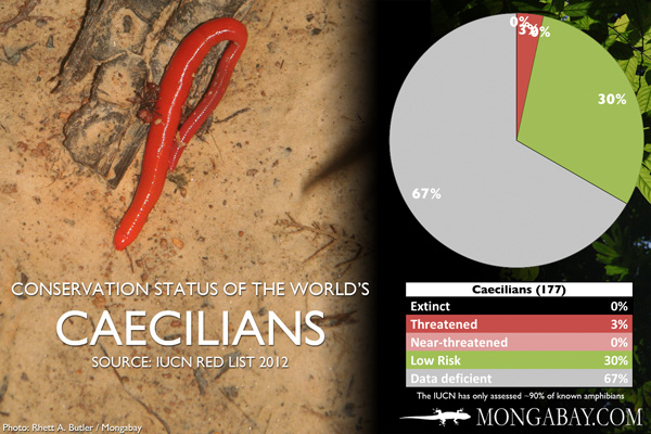 Chart: conservation status of the world's caecilians