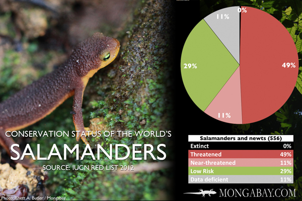 Chart: conservation status of the world's salamanders