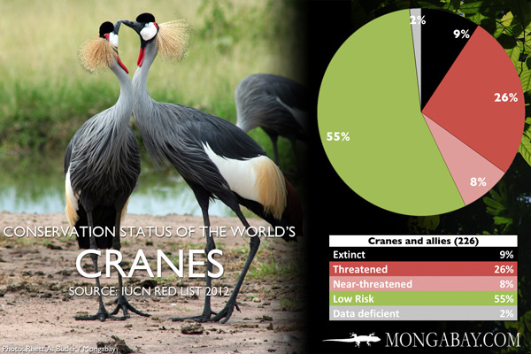 Chart: conservation status of the world's cranes, rails, and allies