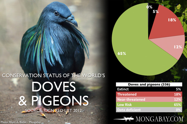 Chart: conservation status of the world's doves and pigeons