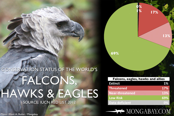 Chart: conservation status of the world's falcons, eagles, hawks and allies