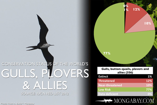 Chart: conservation status of the world's gulls, button-quails, plovers and allies