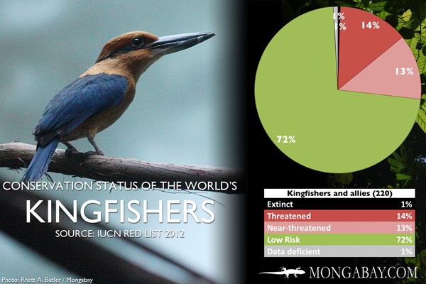 Chart: conservation status of the world's kingfishers and allies