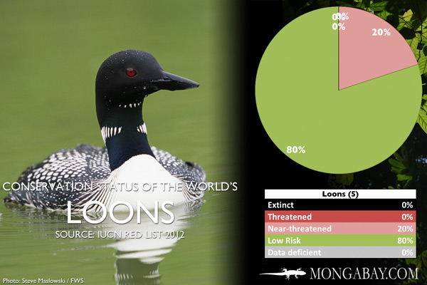 Chart: conservation status of the world's loons