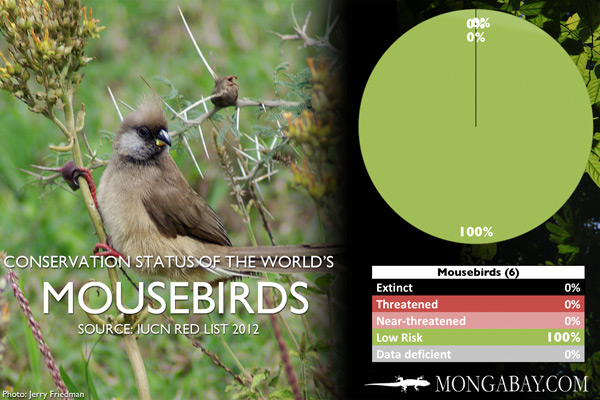 Chart: conservation status of the world's mousebirds