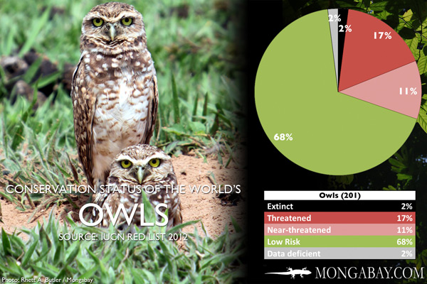 Chart: conservation status of the world's owls