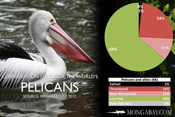 Chart: conservation status of the world's pelicans and allies