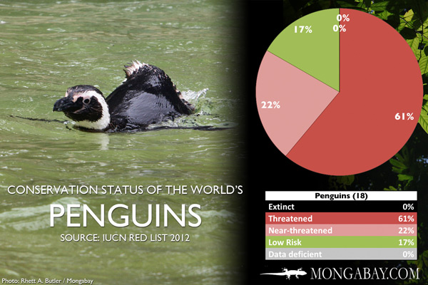 Chart: conservation status of the world's penguins