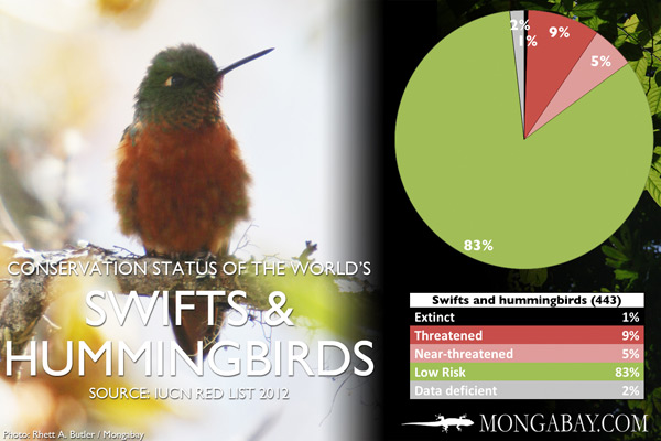 Chart: conservation status of the world's swifts and hummingbirds