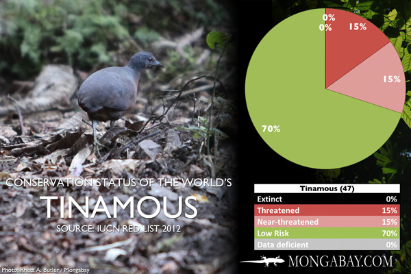 Chart: conservation status of the world's tinamous