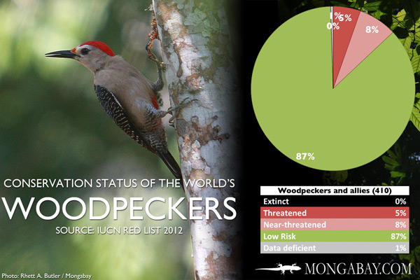 Chart: conservation status of the world's woodpeckers