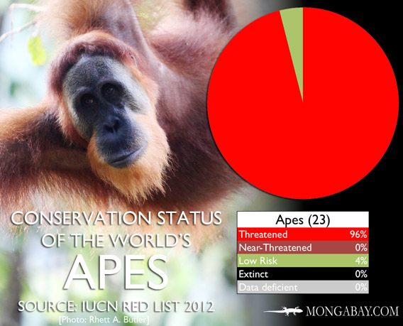 Chart: conservation status of the world's apes