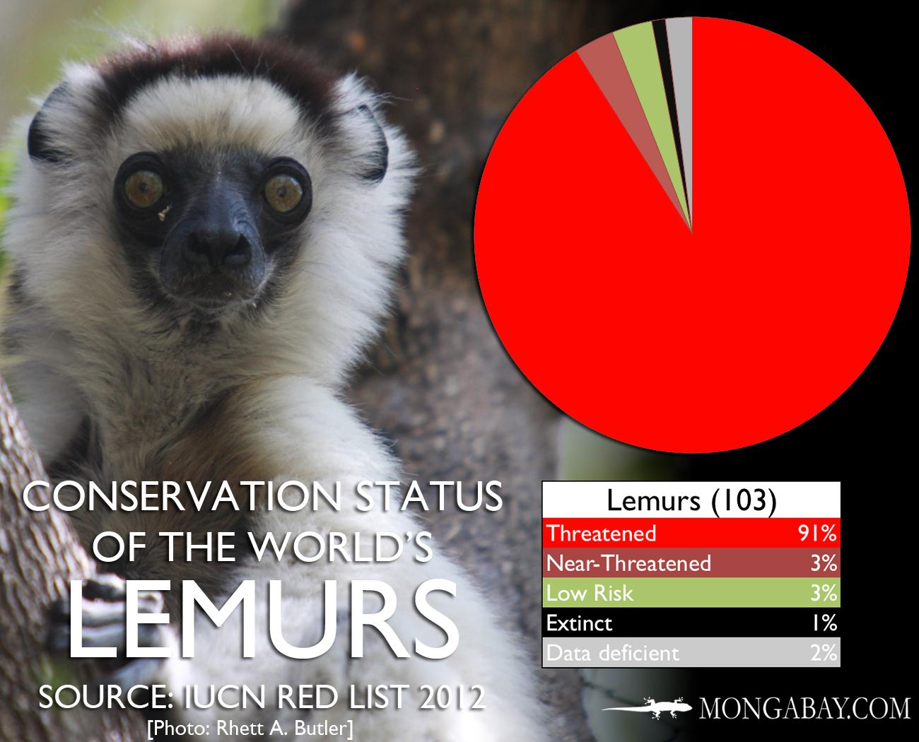 Chart The Worlds Most Endangered Lemurs