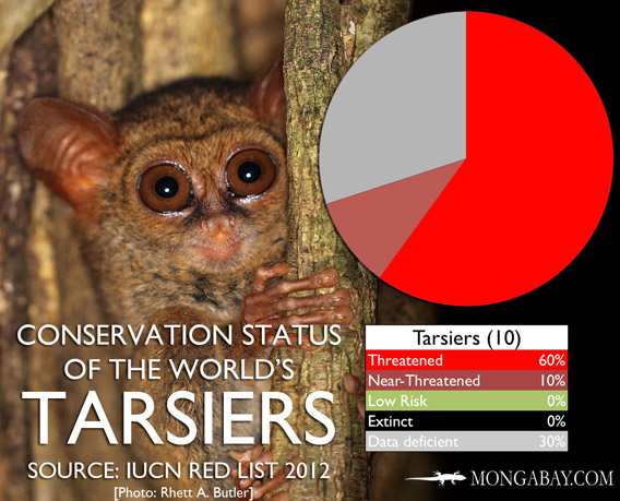 Chart: conservation status of the world's tarsiers