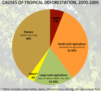 environmental issue tropical rainforest deforestation Amazonian deforestation has lately become an issue of broad political concern,   mj edenecology and land development: the case of amazonian rainforest.