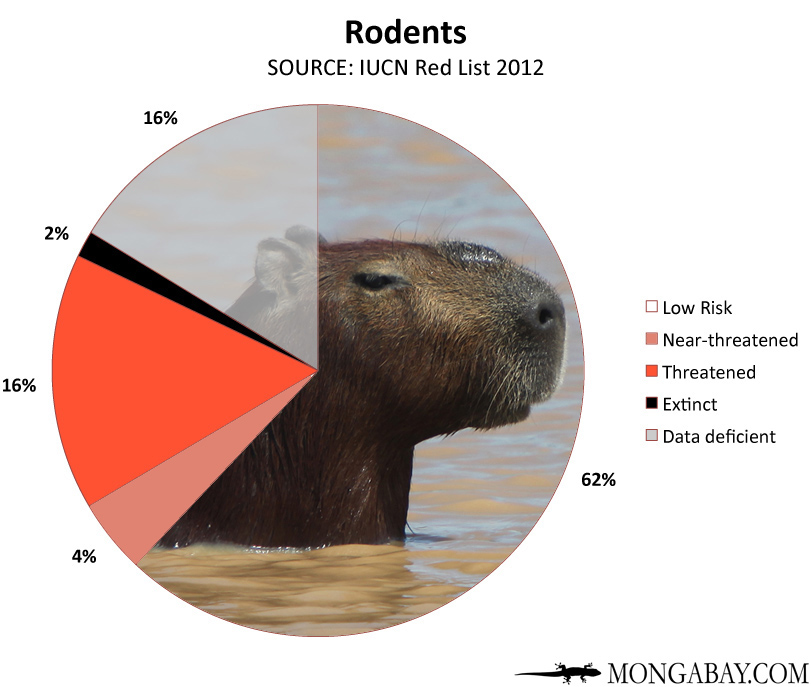 Chart: conservation status of the world's rodents