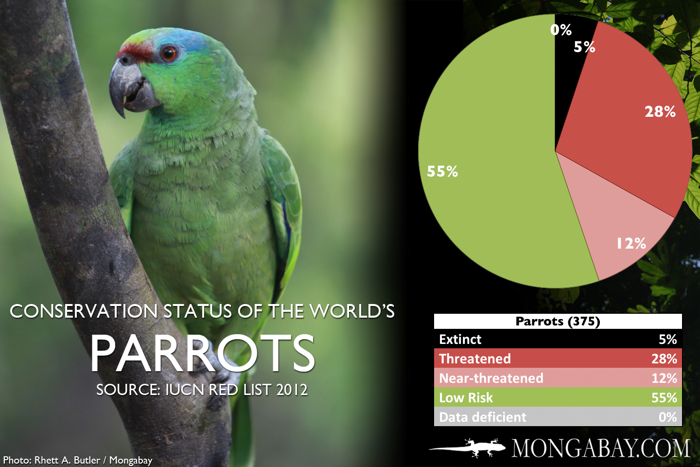 Chart The World S Most Endangered Parrots And Allies