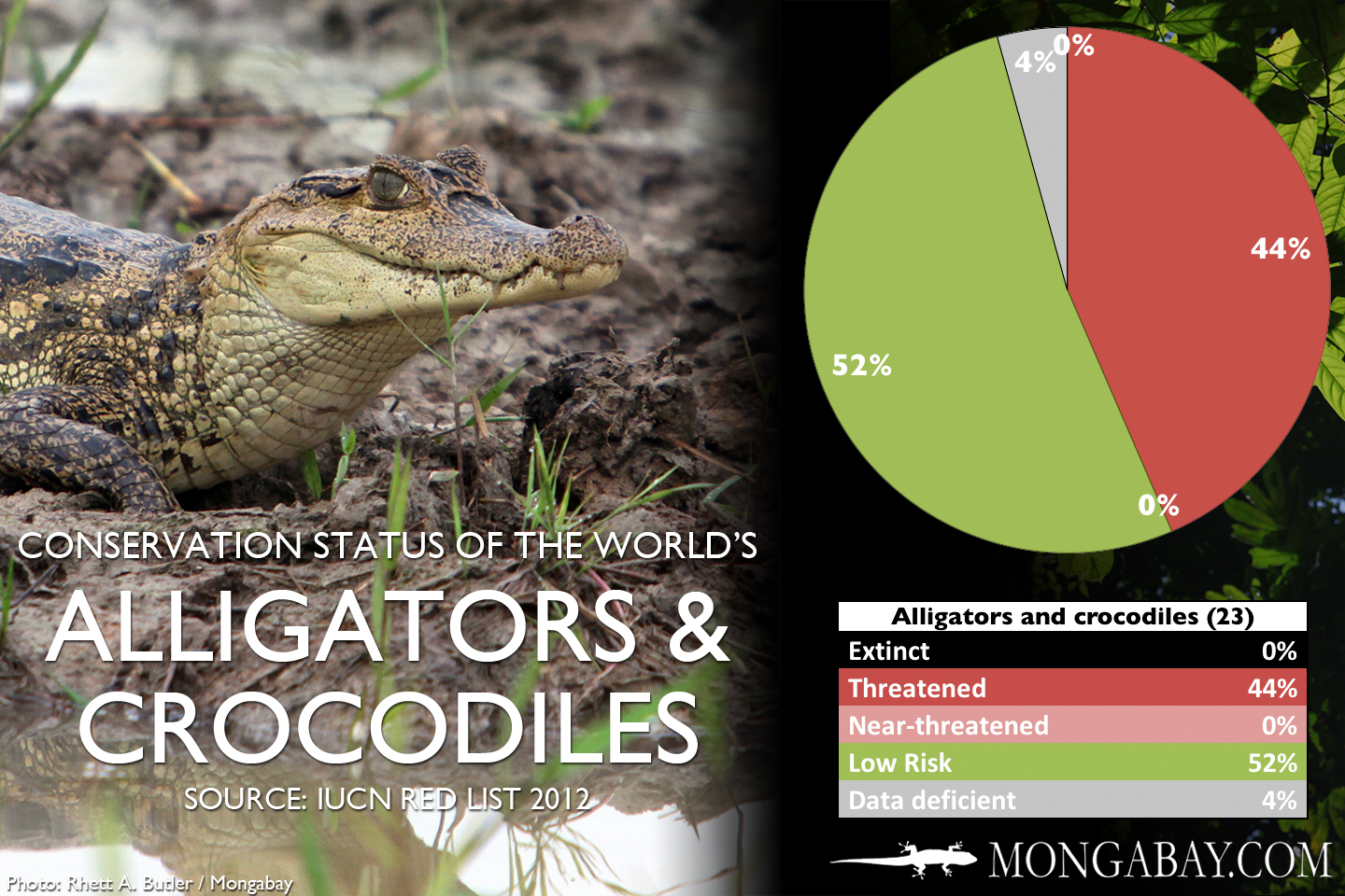 9e55c7c36 CHART  The world s most endangered crocodiles and alligators