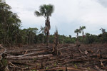 Small scale deforestation in the Colombian Amazon [colombia_0061]