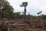 Small scale deforestation in the Colombian Amazon [colombia_0064]