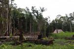 Maloka and casava in the Colombia Amazon