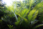 Palm grove in the Amazon