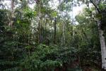 Interior of the Amazon rainforest