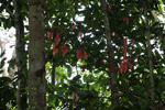 Red leaves in the rainforest