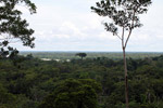 Giant kapok (ceiba) rising above the Amazon rainforest canopy