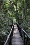Raised rainforest walkway at Amacayacu