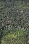 Aerial view of secondary and primary forest in the Amazon [colombia_1323]