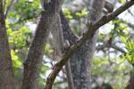 birds [colombia_1492]