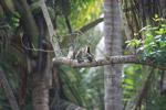birds [colombia_1494]
