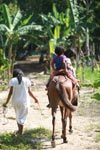 Arhuaco kids on horseback