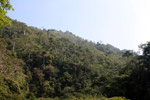 Forest regenerating on former coca lands